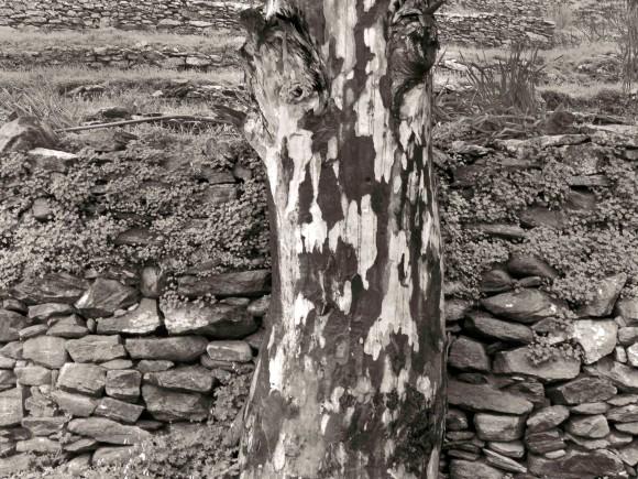 tree trunck